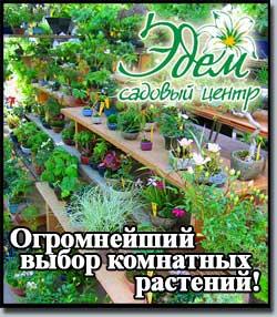 """Покупайте комнатные растения в магазинах """"Эдем""""!"""